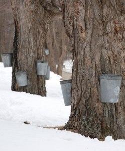 trees-buckets