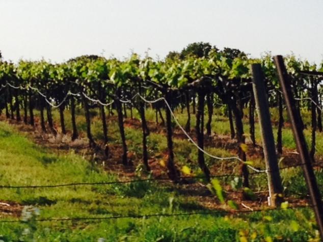 Passing Shot: El Dorado County Wine in the Making