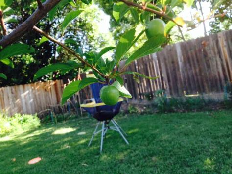 Backyard Orchard Practice Basket