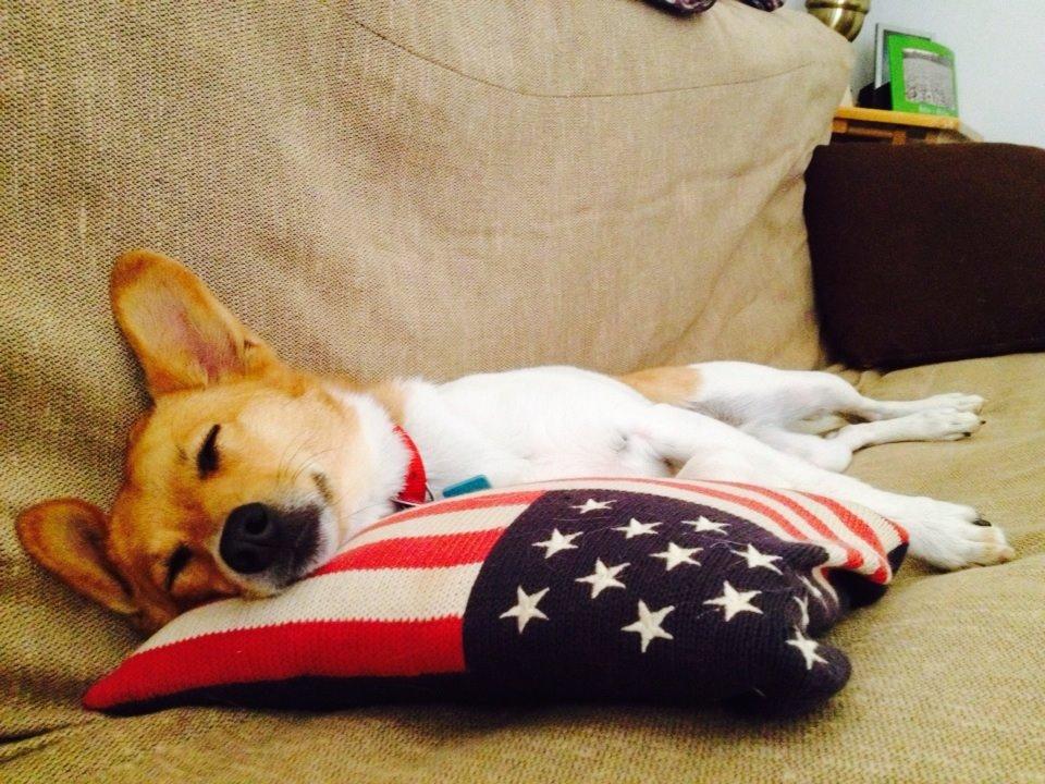 American Ninja Terrier: Big Adventures of a Little Dog