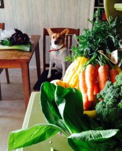 Capay Organic